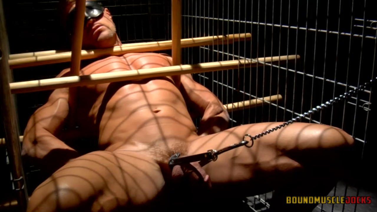 male bdsm dog training